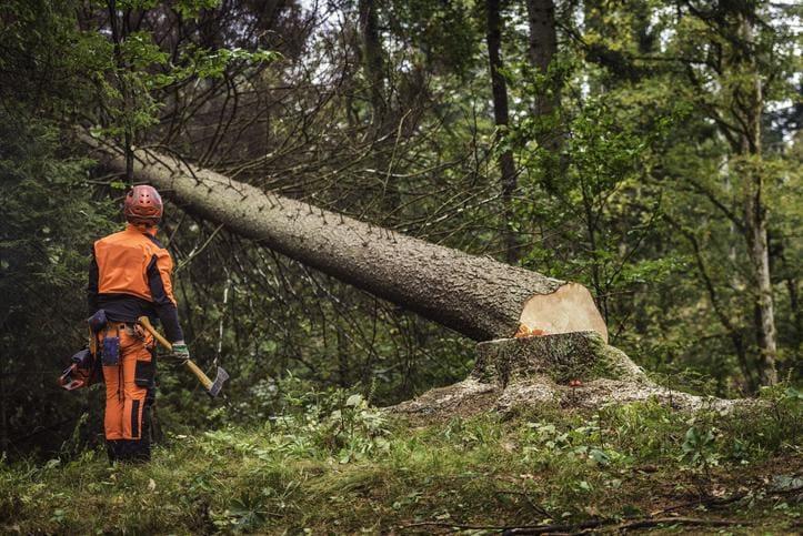 Jak prawidłowo wyciąć drzewo?