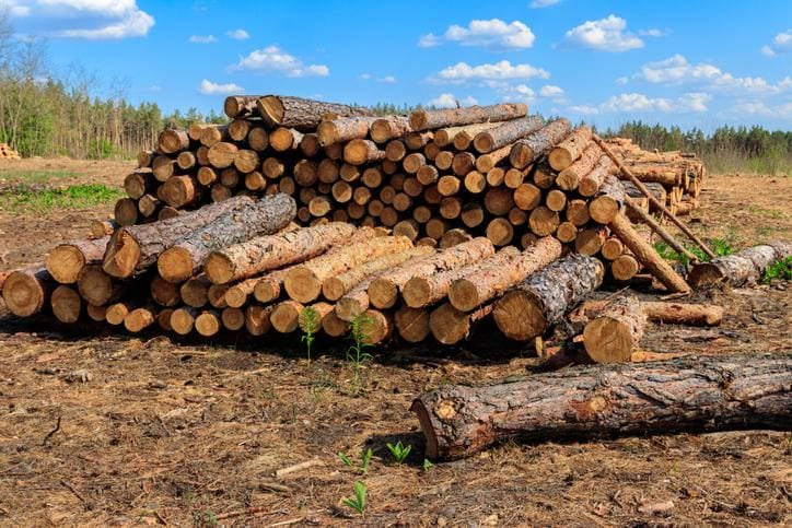 Wycinka drzew w świetle prawa