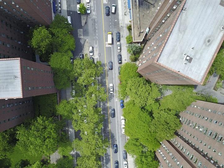 Co ma wpływa na statykę drzewa i jak poznać zagrożenie?