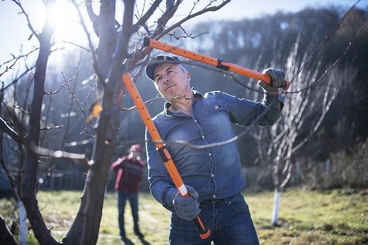 Jakie podjąć działania gdy część gałęzi drzewa jest wysuszona?