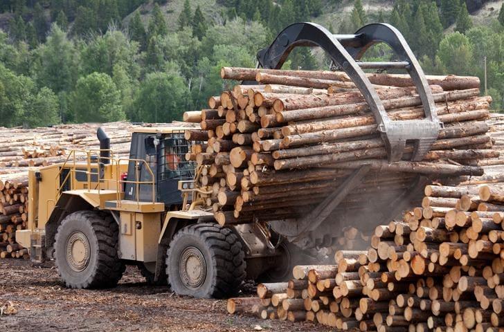 Jak wygląda maszynowe pozyskiwanie drewna?