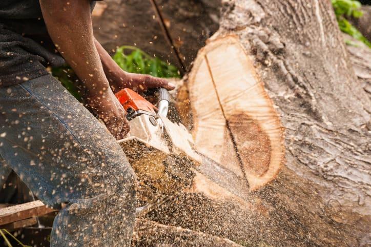 cięcie drzewa