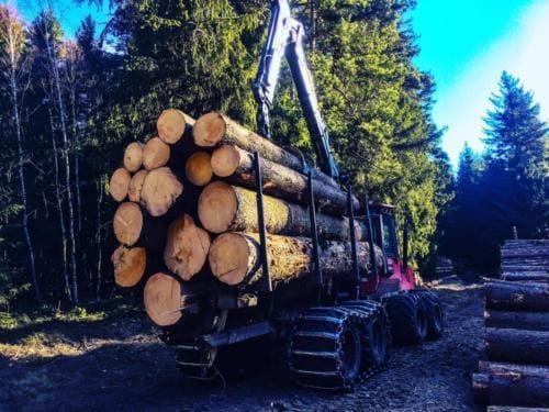 Wycięte drzewa załadowane do transportu