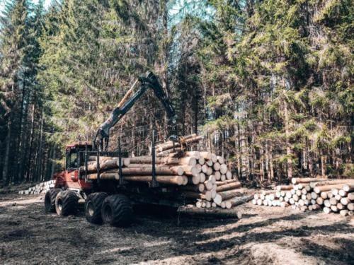 Załadunek wyciętych drzew